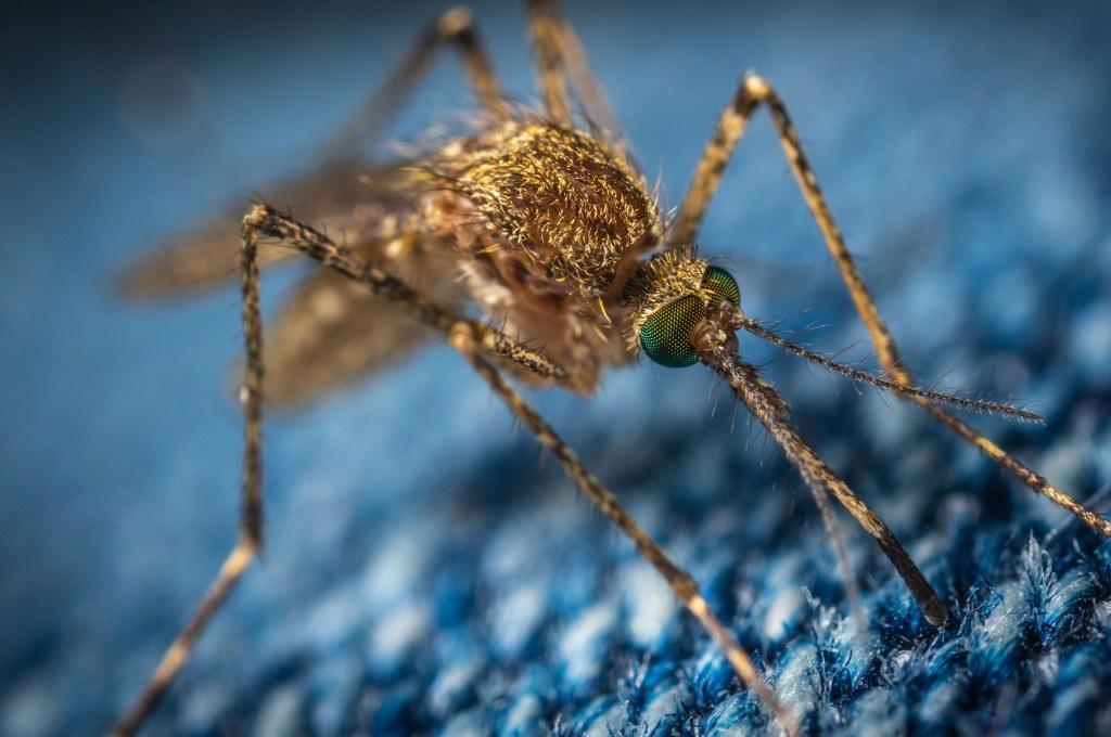 Aleovitro - Malaria